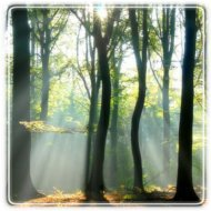 Turning Leaf Counseling 0 Consultation, LLC