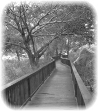 A Wooden Path
