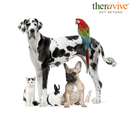 edited bigstock group of pets dog cat bird 4788629