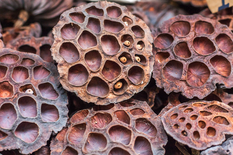 Trypophobia Remains Poorly Understood